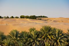 在Liwa绿洲,阿联酋的沙漠沙丘 免版税库存图片