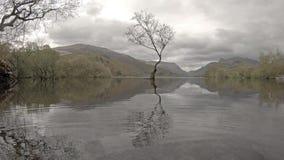 在Llanberis, Snowdonia国家公园-威尔士,英国的孤立树 影视素材