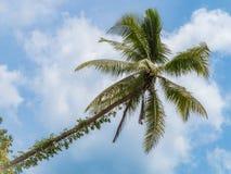 在Loboc河,保和省,菲律宾的棕榈树 免版税图库摄影