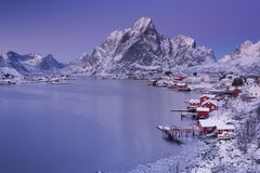 在Lofoten海岛上的雷讷在北挪威在冬天 库存图片