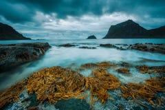 在Lofoten海岛上的Haukland海滩在挪威 库存照片