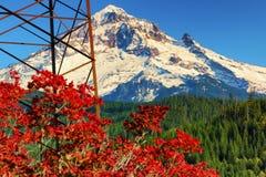 在Lolo通行证Mt的秋天 敞篷国家森林 库存照片