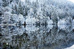 在Longemer湖反映的冬天多雪的森林 免版税库存照片