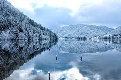 在Longemer湖反映的冬天多雪的森林 免版税库存图片