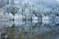 在Longemer湖反映的冬天多雪的森林 库存照片