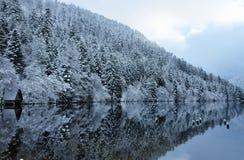 在Longemer湖反映的冬天多雪的森林 库存图片