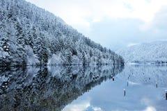 在Longemer湖反映的冬天多雪的森林 图库摄影