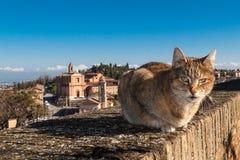 在longiano堡垒的栏杆墙壁上的一只猫  库存图片