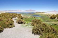 在Los佛拉明柯舞曲国家储备,智利的足迹 库存图片