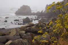 在Lost的美丽的景色在加利福尼亚沿岸航行风景Mattole路 免版税库存照片