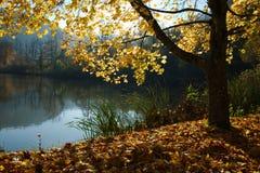 在Lucelle湖的秋天树 免版税库存图片