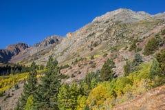 在Lundy湖,加利福尼亚的秋天颜色 库存照片