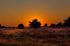 在Luneburg荒地的日落 免版税库存图片