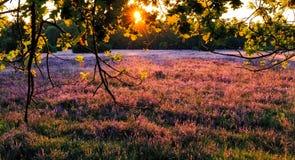 在Luneburg荒地的日落 库存图片