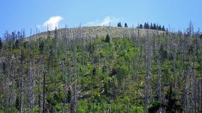 在Lusen山的上面落后 免版税库存照片