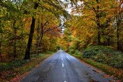 在Lynford树木园的秋天 图库摄影
