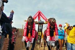 在Madura公牛种族,印度尼西亚的装饰的公牛 图库摄影