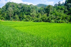 在Mae越共,泰国的Forrest 库存图片