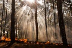 在Mae洪sorn,泰国的野火 库存照片