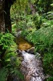 在Mae Ya土井Inthanon清迈泰国的Namtok Siriphum Sirithan瀑布 库存照片