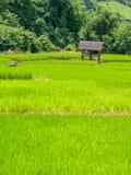 在Maechaem 2的稻 库存图片