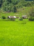 在Maechaem 6的稻 免版税库存照片