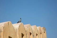 在Mahargarh堡垒墙壁上隔绝的鸟  库存照片