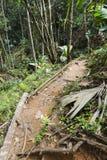 在Mahe,塞舌尔群岛的热带雨林 库存图片