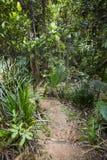 在Mahe,塞舌尔群岛的热带雨林 免版税库存图片