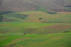在Mai Chau,越南的山风景 库存照片