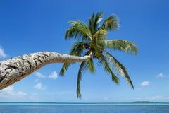 在Makaha `的倾斜的棕榈树在汤加塔布岛海岛附近的一个海岛  免版税图库摄影