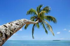 在Makaha& x27的倾斜的棕榈树; 在汤加塔布岛海岛附近的一个海岛 库存照片