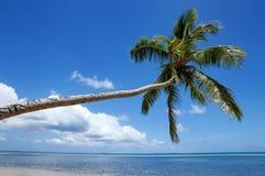 在Makaha& x27的倾斜的棕榈树; 在汤加塔布岛海岛附近的一个海岛 库存图片