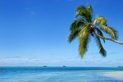 在Makaha& x27的倾斜的棕榈树; 在汤加塔布岛海岛附近的一个海岛 免版税库存图片