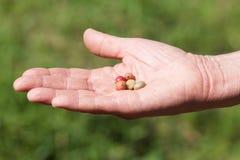 在man& x27的阿拉伯咖啡和粗粒咖啡豆; s手,绿色backgrou 免版税库存图片