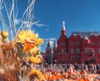 在Manezhnaya广场的节日`金黄秋天` 向日葵和南瓜在历史博物馆前面红场的 库存图片