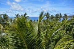 在Mantaray海岛,斐济的美好的棕榈树视图 免版税图库摄影