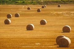 在Mantua (意大利)附近的农村横向 免版税库存图片