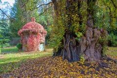 在Maroondah水库公园的树秋天的 库存图片