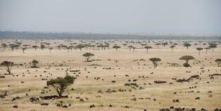 在Masia玛拉,肯尼亚的平原 免版税库存图片