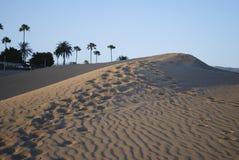 在Maspalomas、棕榈树和一片绿洲的沙丘的日落在背景中 免版税库存图片