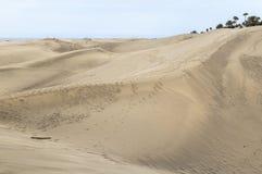在Maspalomas的剧烈的沙丘大加那利岛的 棕榈树 库存照片