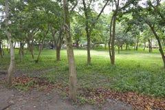 在Matanao,南达沃省,菲律宾的市政霍尔的前提增长的树 免版税库存照片
