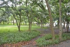 在Matanao,南达沃省,菲律宾的市政霍尔的前提增长的树 库存照片