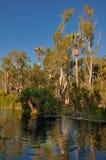 在Mataranka的热量池 免版税库存照片