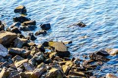 在Matsqui堤的海岸线的岩石沿弗拉塞尔河的在Abbotsford镇和使命之间 免版税库存照片