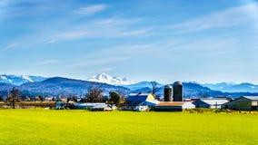 在Matsqui堤附近的农田在Abbotsford和使命镇在不列颠哥伦比亚省,加拿大 免版税库存图片