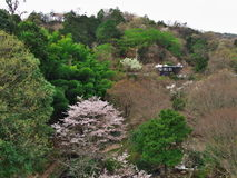 在Matukawa湖的樱花 图库摄影