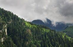 在Mayrhofen附近的阿尔卑斯 提洛尔 奥地利 免版税库存照片