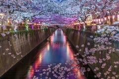 在Meguro河打开樱花佐仓在东京日本 免版税库存照片